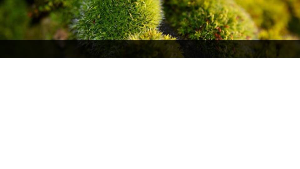 Obrazek posiada pusty atrybut alt; plik o nazwie Pusty-szablon-6.jpg